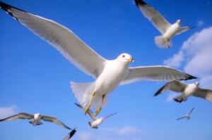 birds_0031