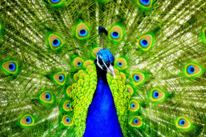 birds_011