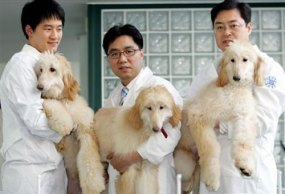 cloning-dogs