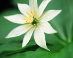 flower_062