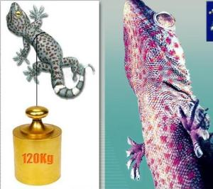gecko (1)