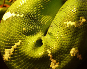reptiles_002