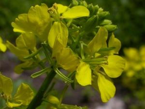 heyecan tebili calan bitkiler