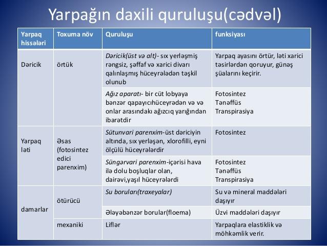 biologiya-yarpan-daxili-quruluu-3-638