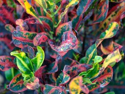 bitkilerin-rengarengliyi-senet-numunesidir-0bI0