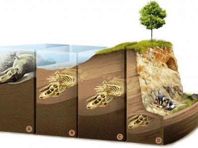 fosiller-nece-tapilir-ve-cixarilir-GA2R