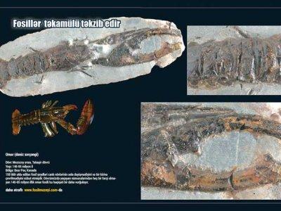 fosillerin-gosterdiyi-heqiqet-yaradilis-ThSB
